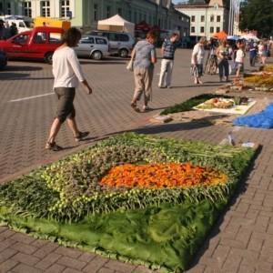 Festiwal kwiatów 'Dywany kwiatowe' Ventspils (Windawa) Łotwa