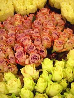 róże Walentynki