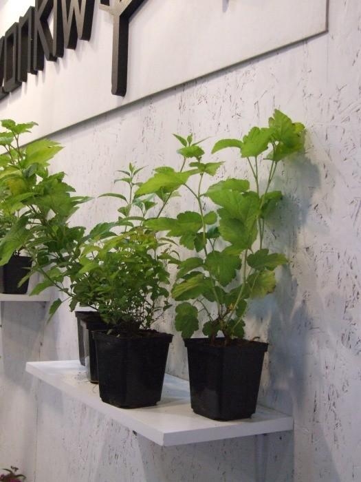Roślina na białym tle – jasno i wyraźnie