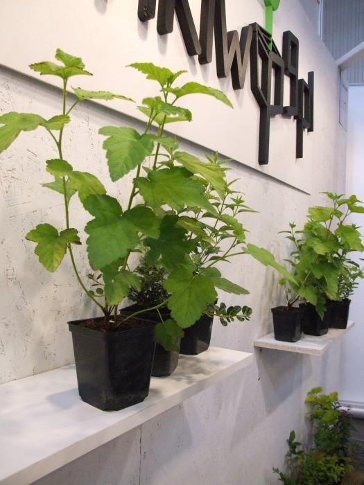 Zielono na białym – czytelna ekspozycja firmy Sadzonkiwp9.pl