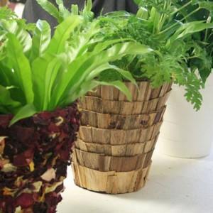 Dizajn roślinny