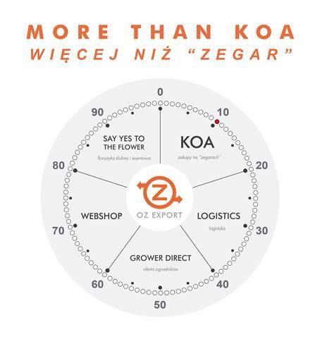 more than koa