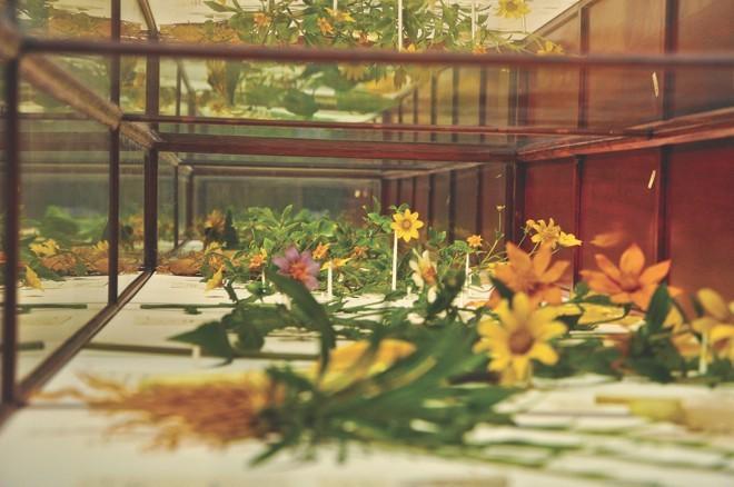 Kwiaty dla których czas się zatrzymał – szklana lekcja botaniki