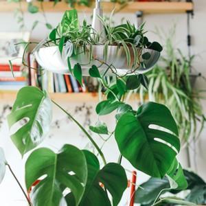 Moda na rośliny doniczkowe trwa!