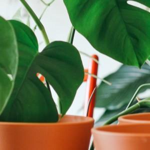 5 sposobów na ograniczenie kosztów w kwiaciarni