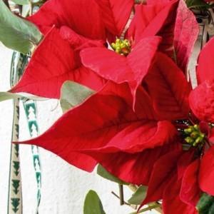 Boże Narodzenie z NDiO-Flora
