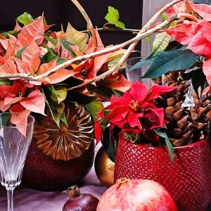 Świąteczne dekoracje stołu z gwiazdą betlejemską