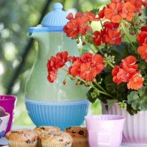 Proste sposoby pielęgnacji pelargonii: Jak wyhodować okazały gąszcz kwiatów