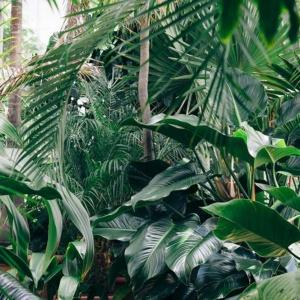rośliny doniczkowe