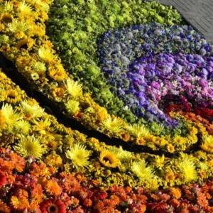 Dywany kwiatowe czyli Międzynarodowy Festiwal Kwiatów na Łotwie