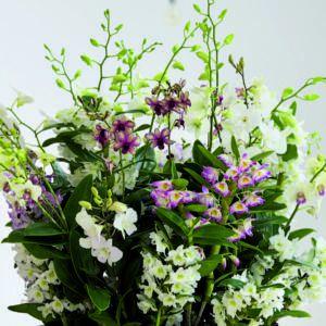 Dendrobium - kwiat doniczkowy na marzec!