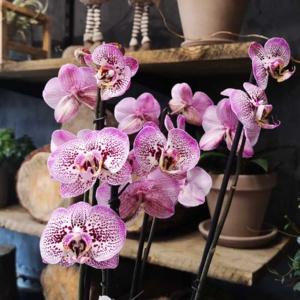 Jestem otwarta, czyli moja kwiaciarnia w czasach koronawirusa