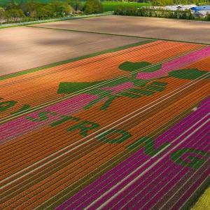 Holenderscy hodowcy tulipanów oddają cześć służbie zdrowia