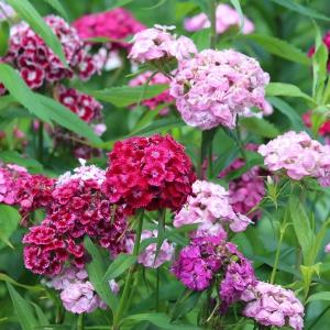 9 kwiatów idealnych do letnich bukietów i aranżacji
