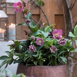 Najbardziej popularne rośliny świąteczne - nasza lista