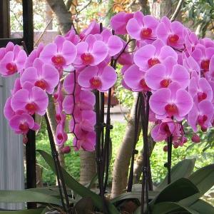 Dlaczego powinniśmy otaczać się roślinami w domu, biurze czy szkole?