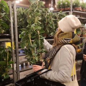 festiwal roślin