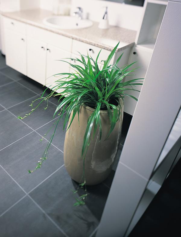 zielistka w kuchni to symbol obfitości i dostatku