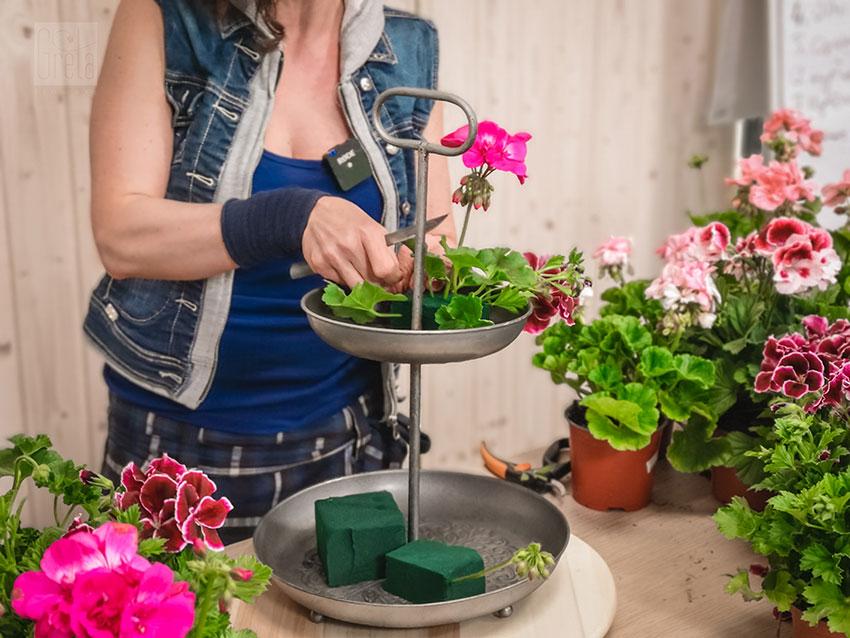 Pelargonia w gąbce florystycznej