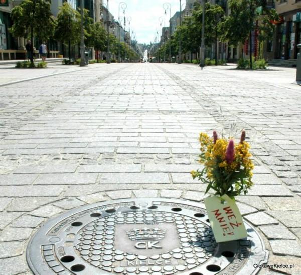 Samotny bukiet w Kielcach