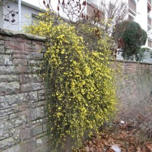 Niezwykłe rośliny kwitnące zimą