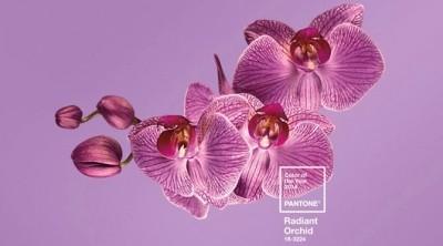 Pantone 2014 Colour Radiant Orchid Purple Flower