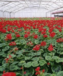 VHV Flowers and Greens - lider wśród dostawców kwiatów