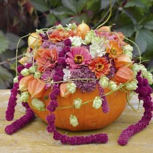 Jesień z NDiO – Flora