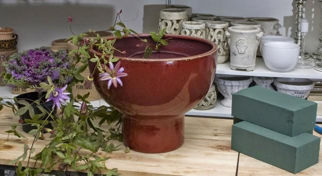 passiflora2