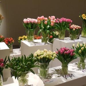 VII Wystawa Tulipanów w Wilanowie