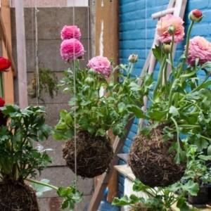 Powieś ogród w swojej kwiaciarni!