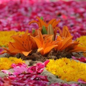 Boże Ciało kwiaty
