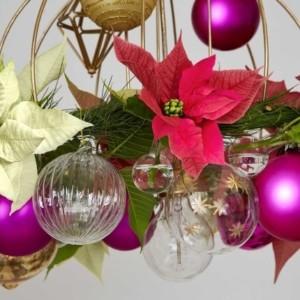 Święta w towarzystwie poinsecji