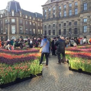 Rozpozęcie sezonu tulipanowego