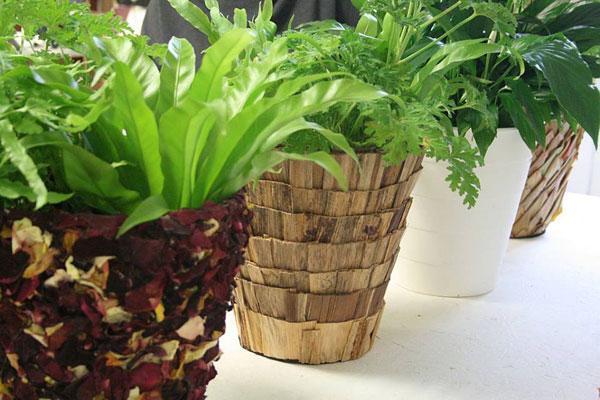 roślinny-design-Kwitnące-Horyzonty-fot-magdalena-birula-białynicka-(2)