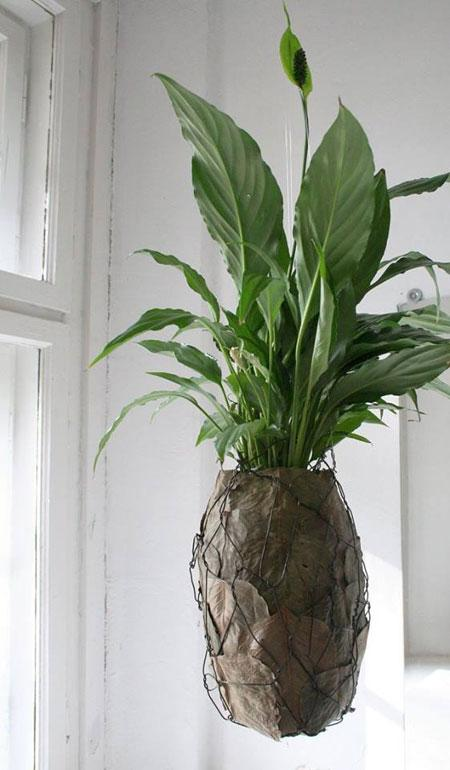 roślinny-design-Kwitnące-Horyzonty-fot-magdalena-birula-białynicka-(7)