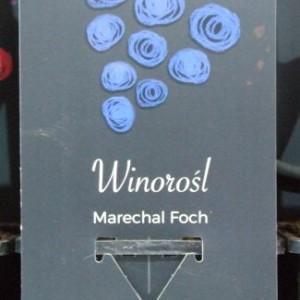 Kwiaty z metką i w bombonierce – branding w ogrodnictwie