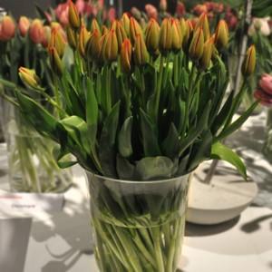Tulipany w Wilanowie - w odmianach i florystycznych aranżacjach