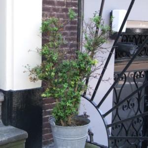 Zielony oddech Amsterdamu
