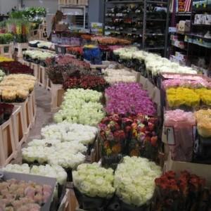 Boom na kwiaty w Polsce?