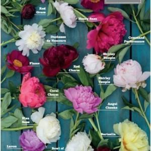 Czy znasz swojego producenta kwiatów?