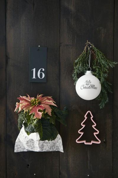 2016-poinsecja-kalendarz-adwentowy-02-pl
