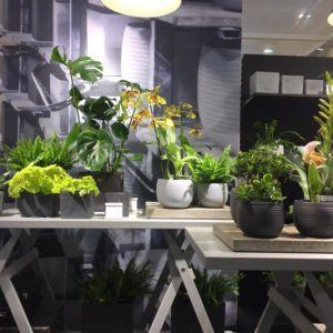 Roślinny biznes na targach IPM Essen