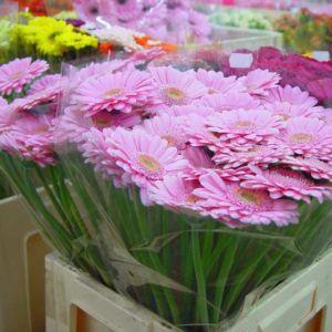 Blanka Direct - Twój nowy dostawca kwiatów?