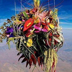 Niezidentyfikowany obiekt kwiatowy!