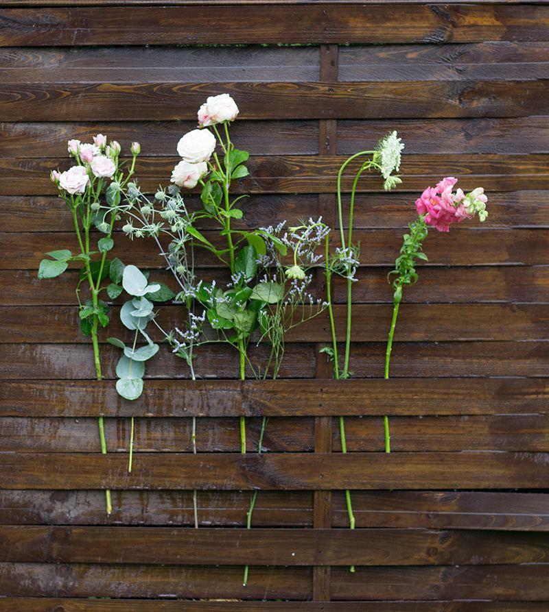 Sapopnaria officinalis, eryngium plannum, Daucus carota, rosa sp., eucaliptus, anthirinum majus, limonium latifolium