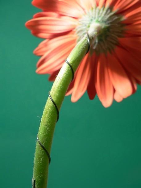 drutowanie kwiatów florystyka