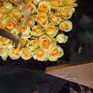Święto Róży Kutno