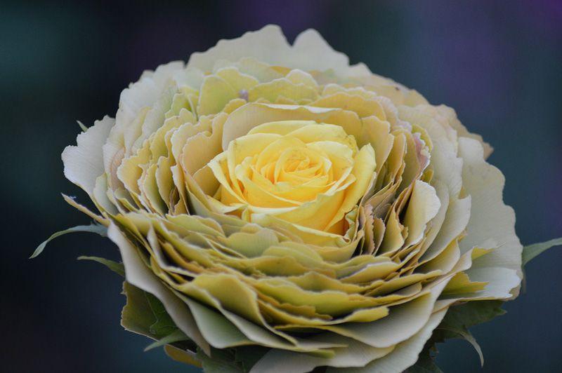 Florystyka haftkowanie
