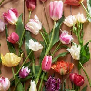 Tulipan - nasza roślina miesiąca!